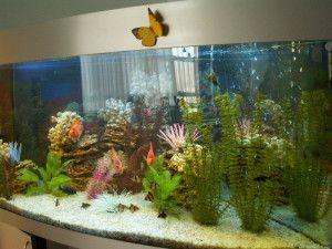 услуги по обслуживанию аквариумов