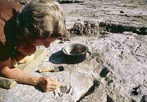 археология в Адыгее